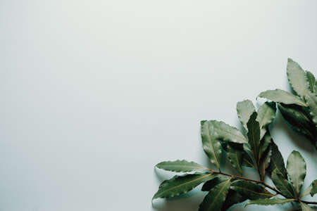 Green leaves showing on the bottom right corner over a white background