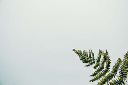 Light blue background with a fern on the corner 写真素材