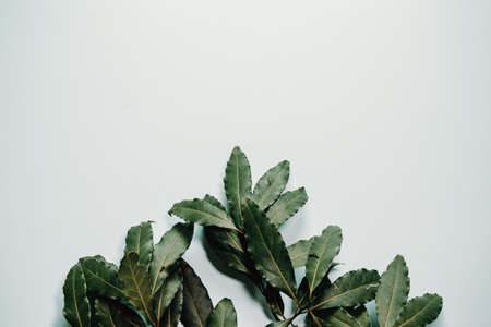 White background with green plants all over it