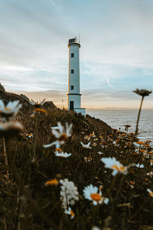The white lighthouse with a lot of daisies in front