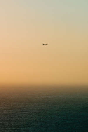 A lonely seagull flying over the horizon with a green ocean below