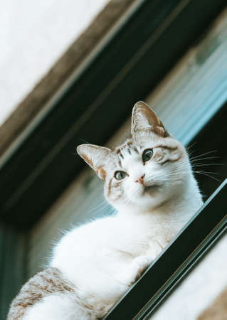A cute and curious cat looking from his window to the people on the street