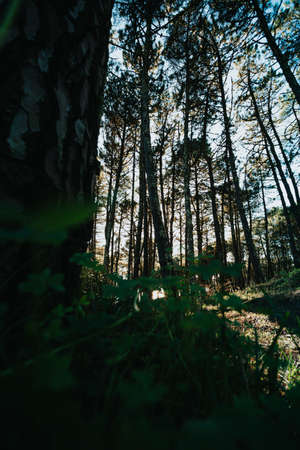 A wide angle shot of a forest with tall trees during the sunset with a green grass and hard shadows