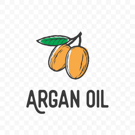 Argan oil . Vector sketch seed fruit and leaf branch for argan oil cosmetic product package design