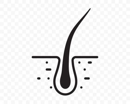 Hair follicle vector line flat icon. Hair bulb in follicle pore, shampoo treatment, dermatology and hair transplantation design element Illusztráció