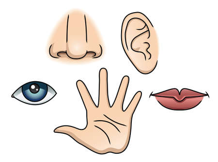 vijf zintuigen icon set. aanraken, ruiken, horen, visie, smaak