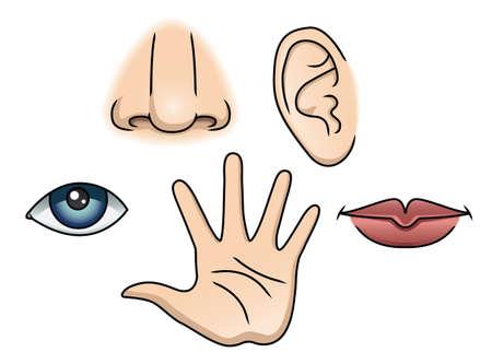 nosa: Ilustracja przedstawiająca 5 zmysłów Ilustracja