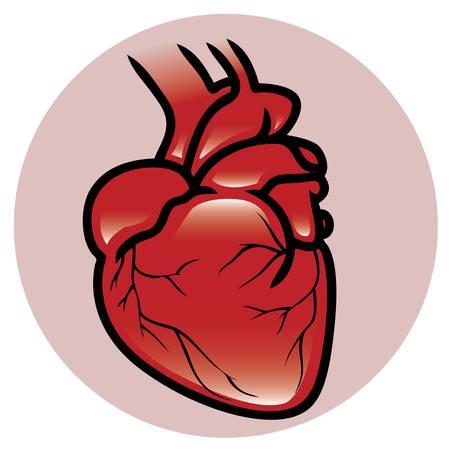 donacion de organos: Un botón o icono de un corazón humano Vectores