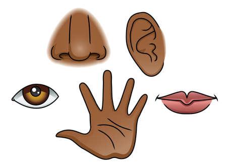 snuffelen: Een illustratie beeltenis van de 5 zintuigen
