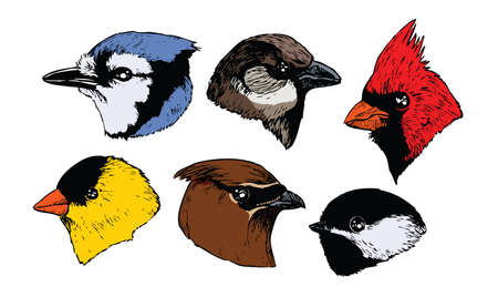 A set of six realistic ink songbird heads in a profile view