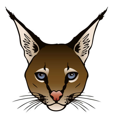 A vector ink illustration of a Caracal s face  Vector