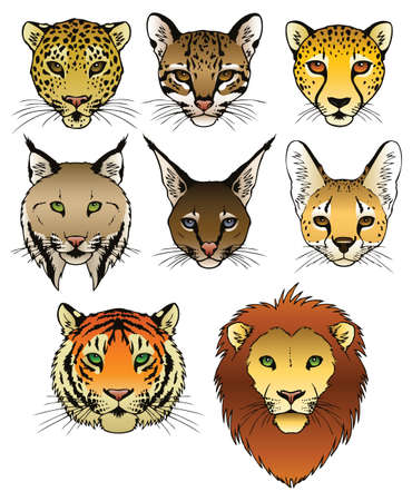 panthera pardus: A set of 8 large predatory cat heads