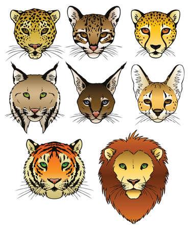Un ensemble de 8 grosses têtes de chat prédateurs Banque d'images - 18263713
