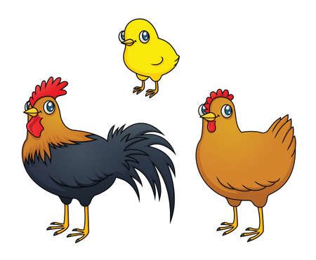 Illustrations of 3 chickens  a rooster, hen and chick