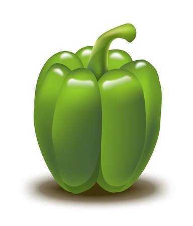A realistic illustration of a bell pepper  Vector