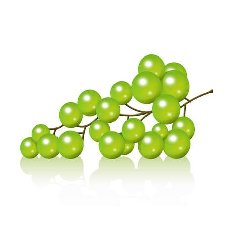 home grown: Realistic grape bunch illustration