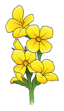 A hand-drawn ink vector of a yellow kalanchoe