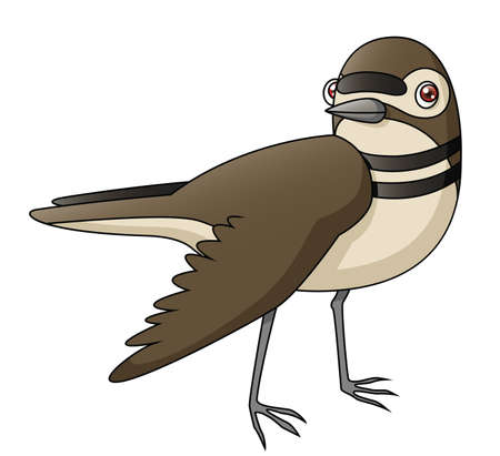 distraction: An Illustration depicting a killdeer faking a broken wing  Illustration