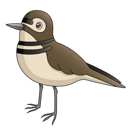 An Illustration depicting a killdeer s profile  Illustration