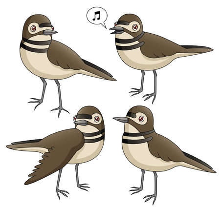 migrate: An Illustration depicting four killdeer in various poses