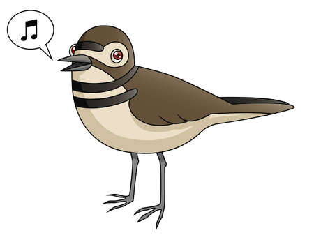An Illustration depicting a killdeer singing
