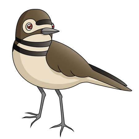 An Illustration depicting a killdeer standing  Illustration