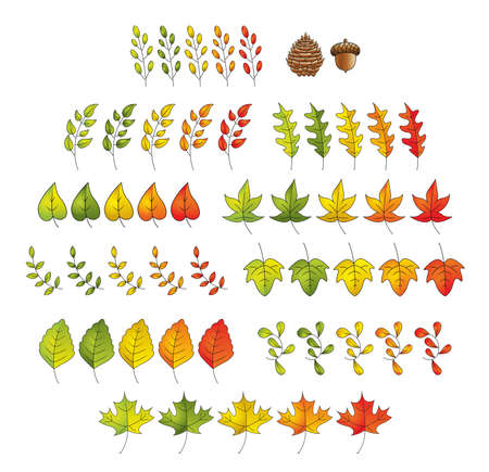 A set of cartoon illustrations featuring different types of leaves, a pinecone and acorn  Ilustracja