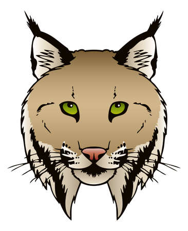 lynx: A vector ink illustration of a Lynx s head