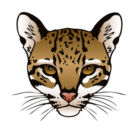 A vector ink illustration of an ocelot s face  Illustration