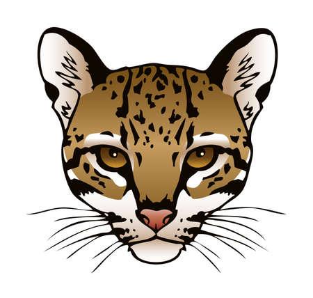 purr: A vector ink illustration of an ocelot s face  Illustration