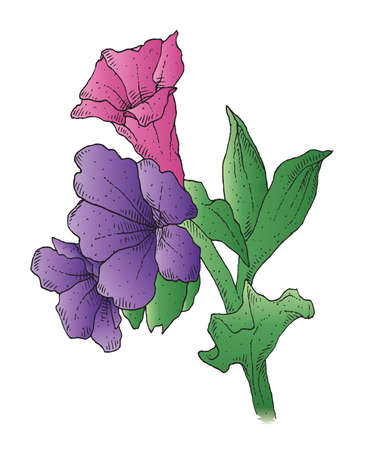 A hand-drawn ink vector of a smoky blue lungwort
