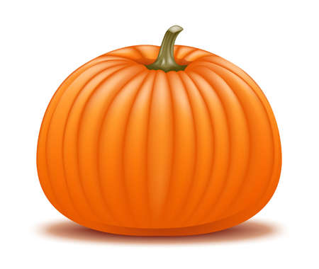 Realistic pumpkin illustration  Stock Vector - 18263951