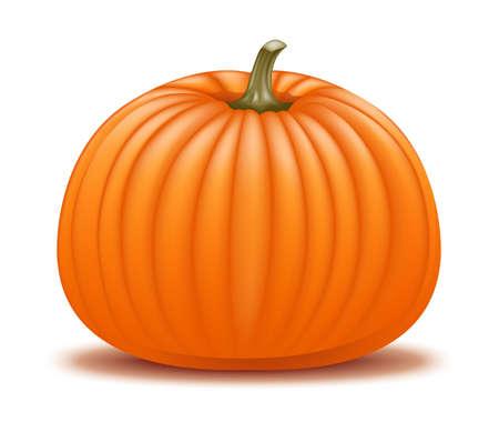 Realistic pumpkin illustration Stock Vector - 18263951