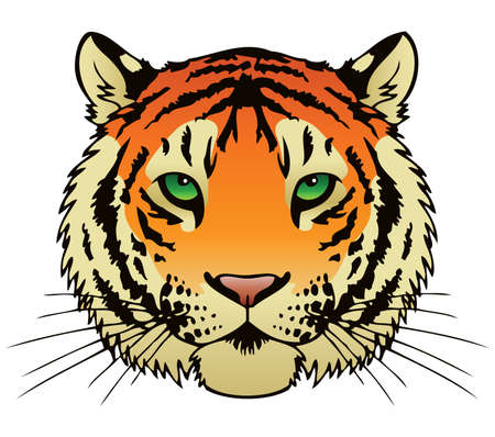 animal head: A vector ink illustration of a tiger s face