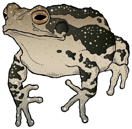 piebald: A hand-drawn ink vector of a toad