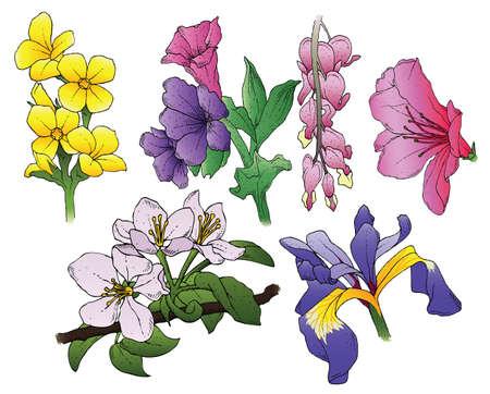 Een set van 6 met de hand getekende bloemen