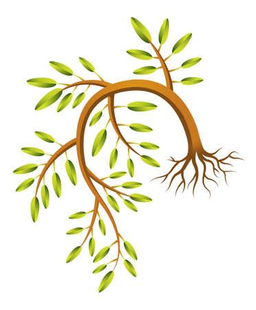 hedge trees: A drooping sapling illustration  Illustration