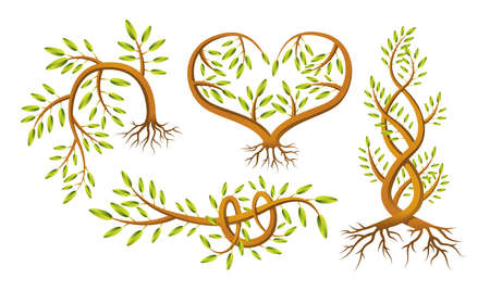 hedge trees: A set of four different shaped sapling illustrations