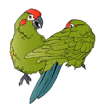 An illustration of a pair of colorful parrots interacting