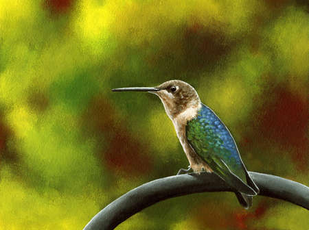 An acrylic painting of a female ruby-throated hummingbird resting on a fence  Stock fotó