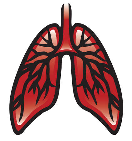 Illustration of a pair of lungs  Vector