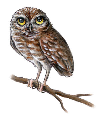 Mixed media illustration of a baby owl perched on a branch