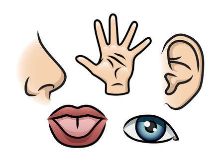 A cartoon illustration depicting the 5 senses  Smell, touch, hearing, taste and sight