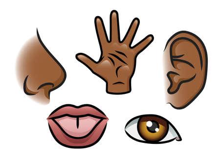 Une illustration de bande dessinée représentant les 5 sens odorat, le toucher, l'ouïe, le goût et de la vue
