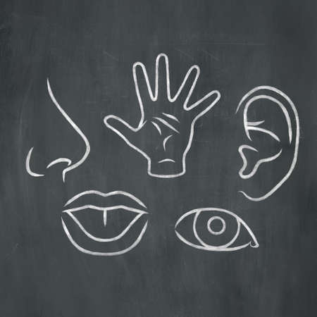 Hand-drawn illustration of the five senses in white chalk on a blackboard background. Standard-Bild
