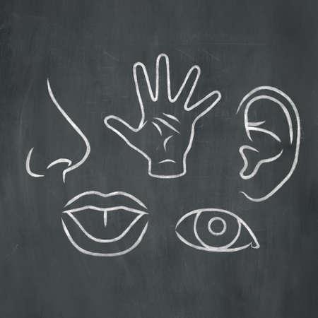 Hand-drawn illustration of the five senses in white chalk on a blackboard background. Archivio Fotografico