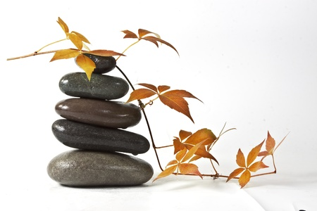 Black stones and yellow leaves with drops photo