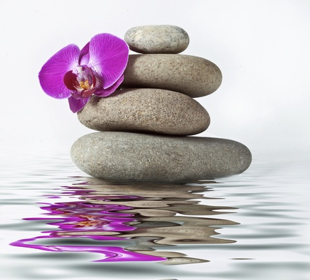 black pebbles: Stones and orchid
