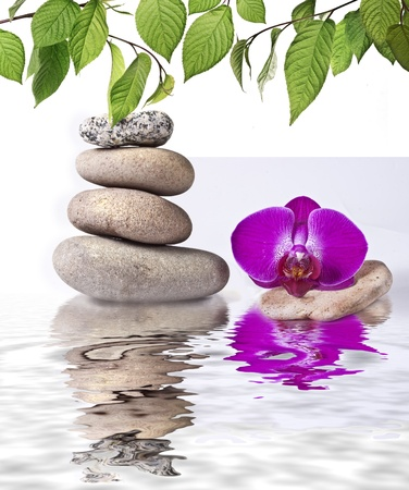 orchid tree: Orchid and stone with reflection Stock Photo