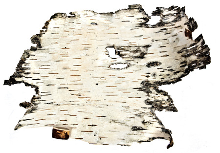 Natural - birch - wallpaper photo
